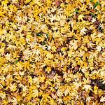 20121114 Carpet