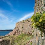 20130901 Wallflowers