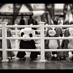 20120405 Evil Panda Gang