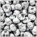 20150408 Garlic
